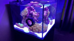The 7 Best Nano Reef Tanks of 2021 (Complete Review)