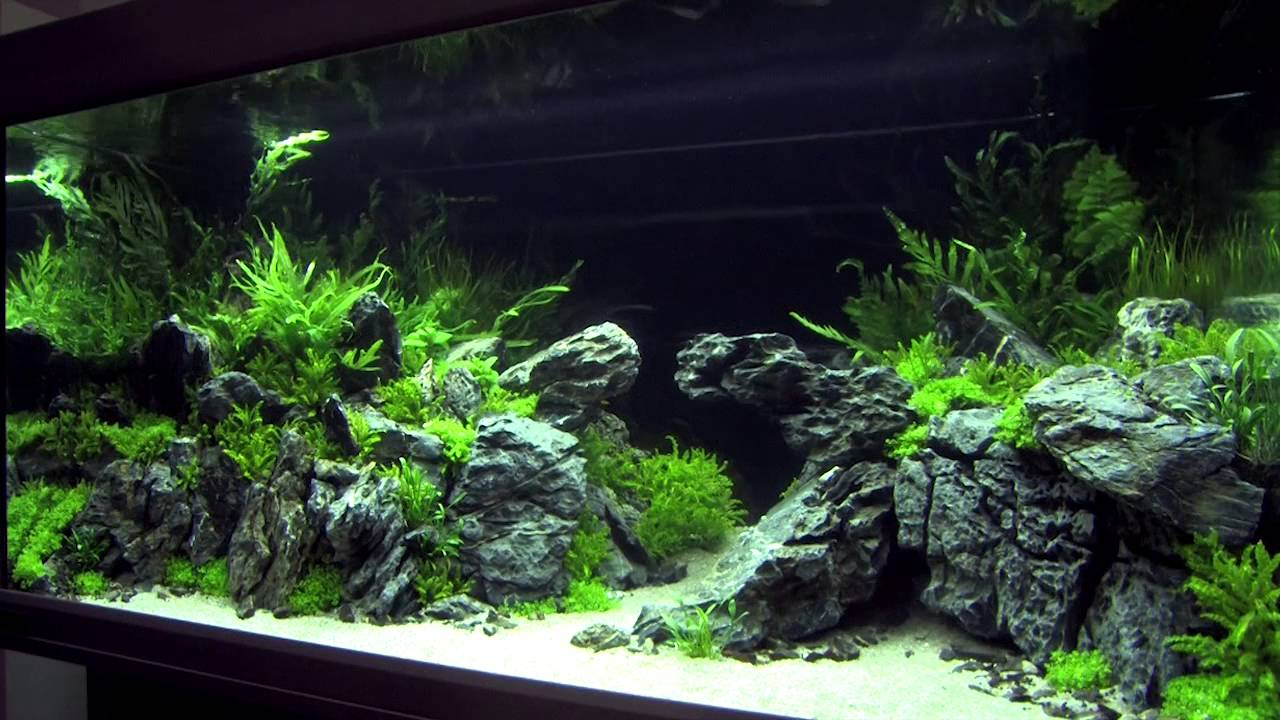 Aquascaping Your Aquarium