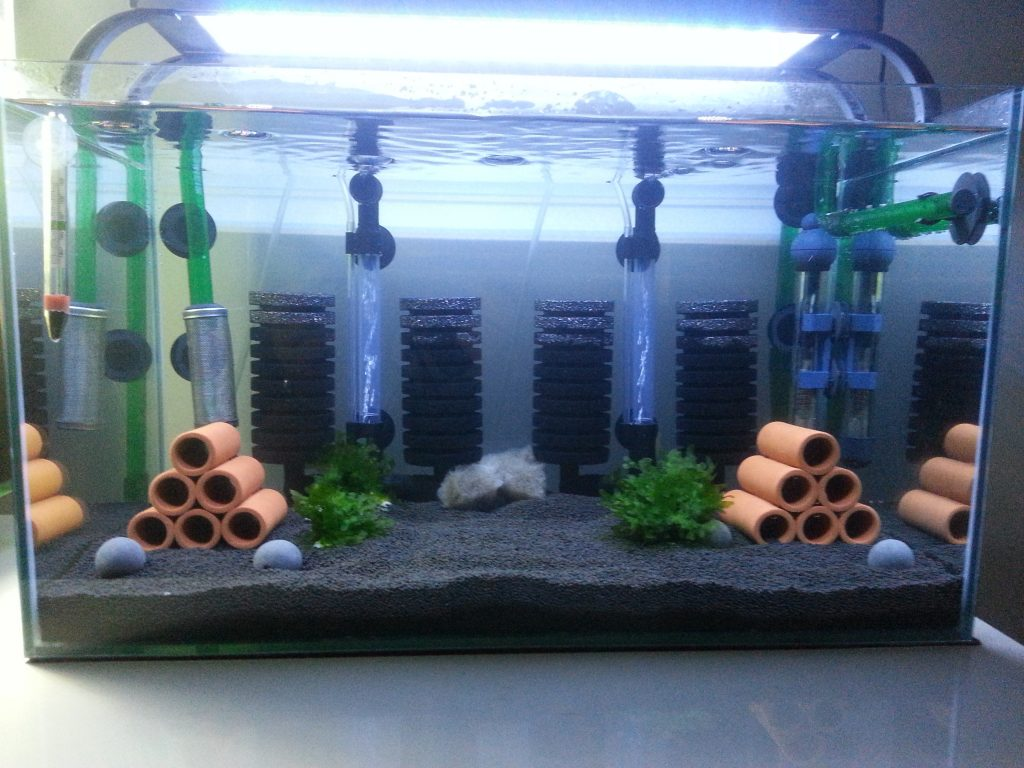 Filtration for Guppies