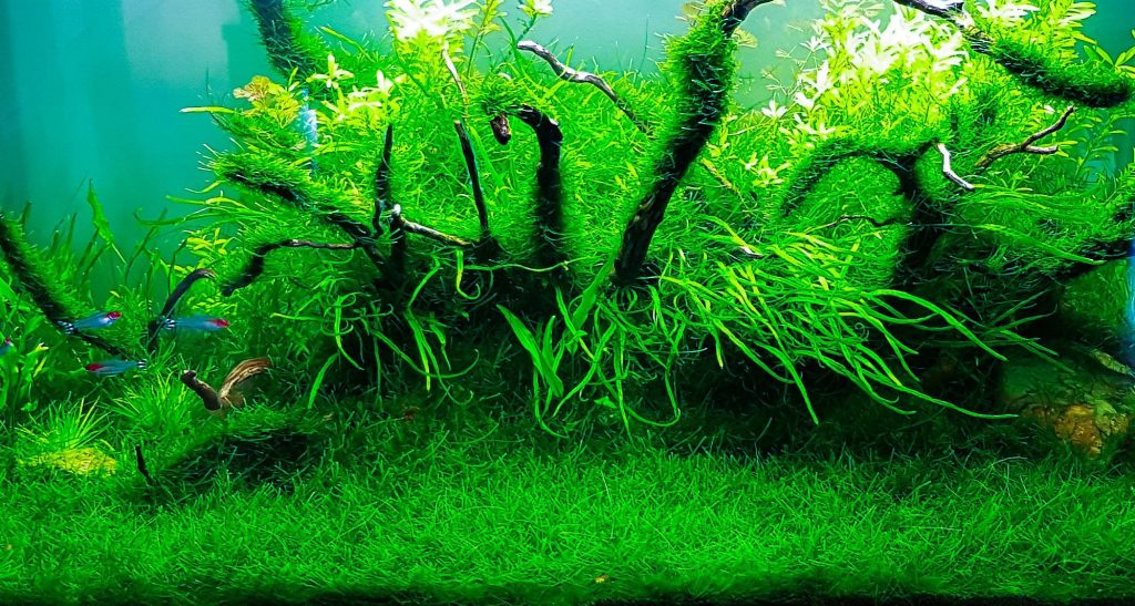 Java Moss Overview