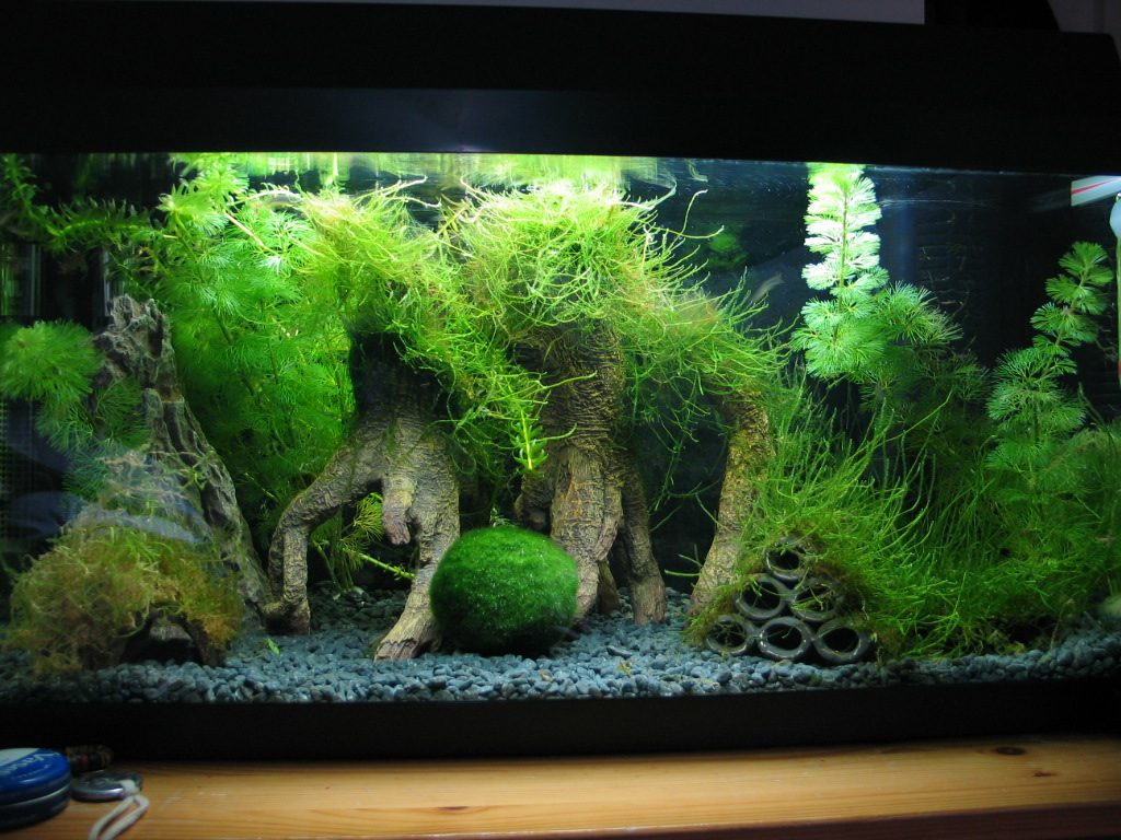 Java Moss: Aquarist's Guide To Planting, Care, & Maintenance