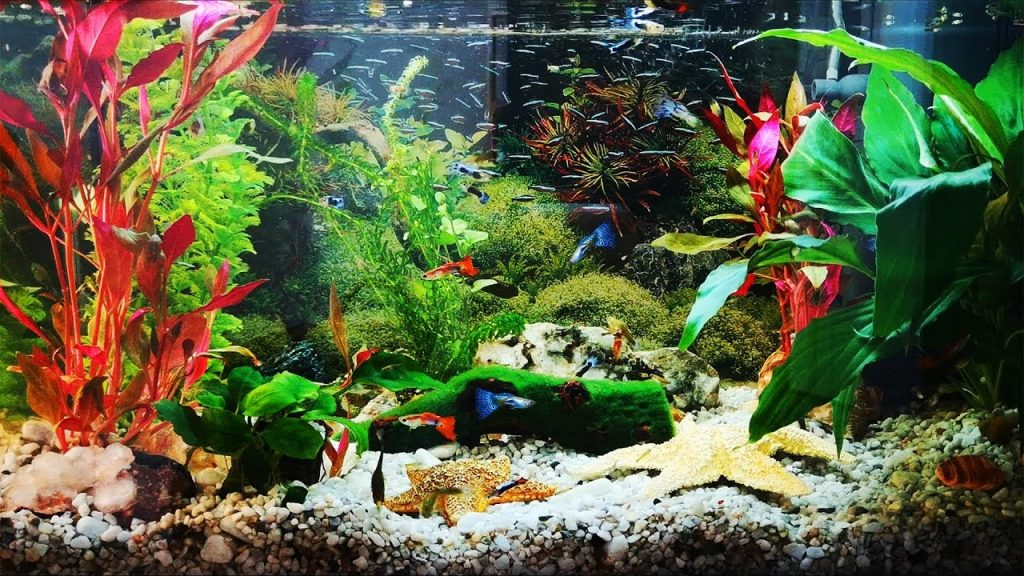 Plants and Decorations for Your Guppies